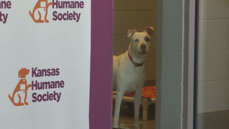 Kansas Humane Society gets Helping Hand as it tries to conserve energy
