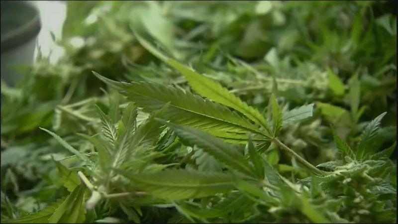 Days after Governor Northam said he favors legalization of marijuana, a panel studying the...