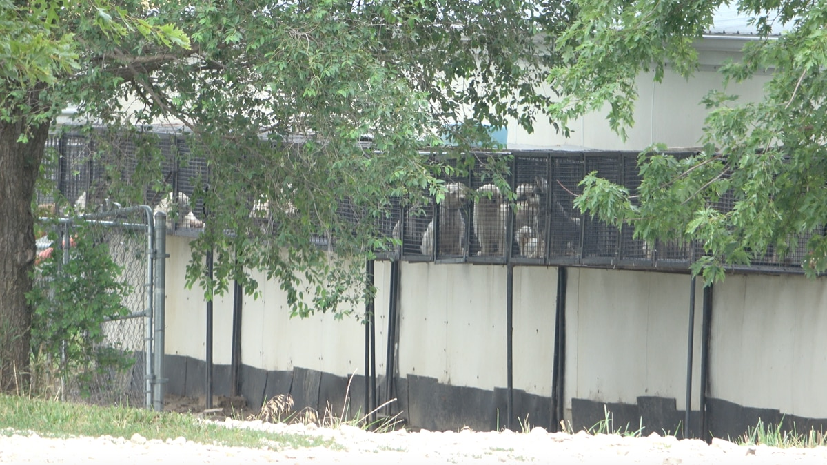 The HSUS claims the photo is of caged breeding dogs at Debra Deters' puppy mill in Centralia,...