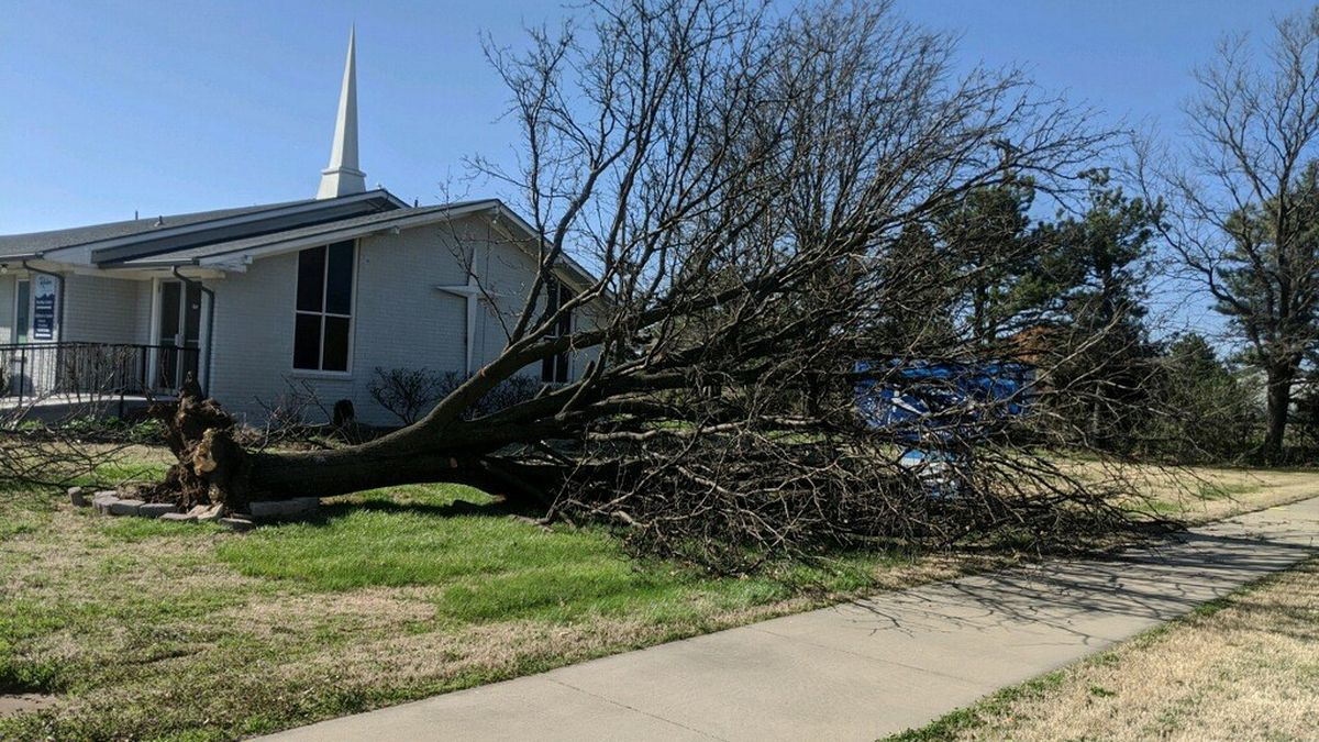 High winds uprooted this tree on Monday in Clearwater.