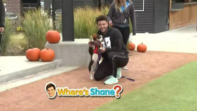 Where's Shane? Wag & Wolf Howl-O-Ween 3