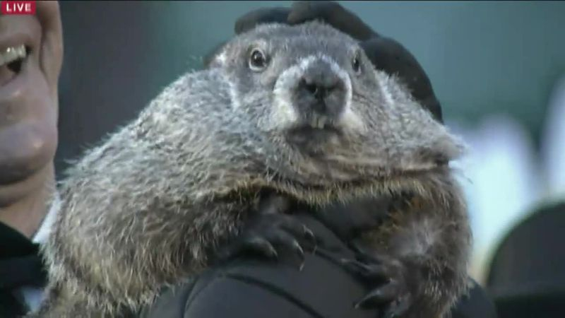 No guests will be allowed to attend Punxsutawney Phil's venture out of his burrow this coming...