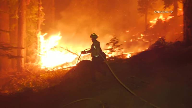Firefighters fight the Caldor Fire Wednesday as flames raced across treetops and through...