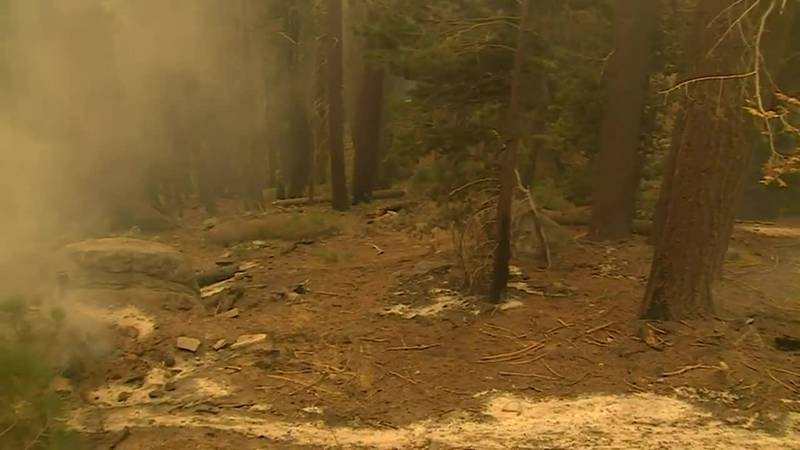 74 giant sequoias destroyed in California wildfires