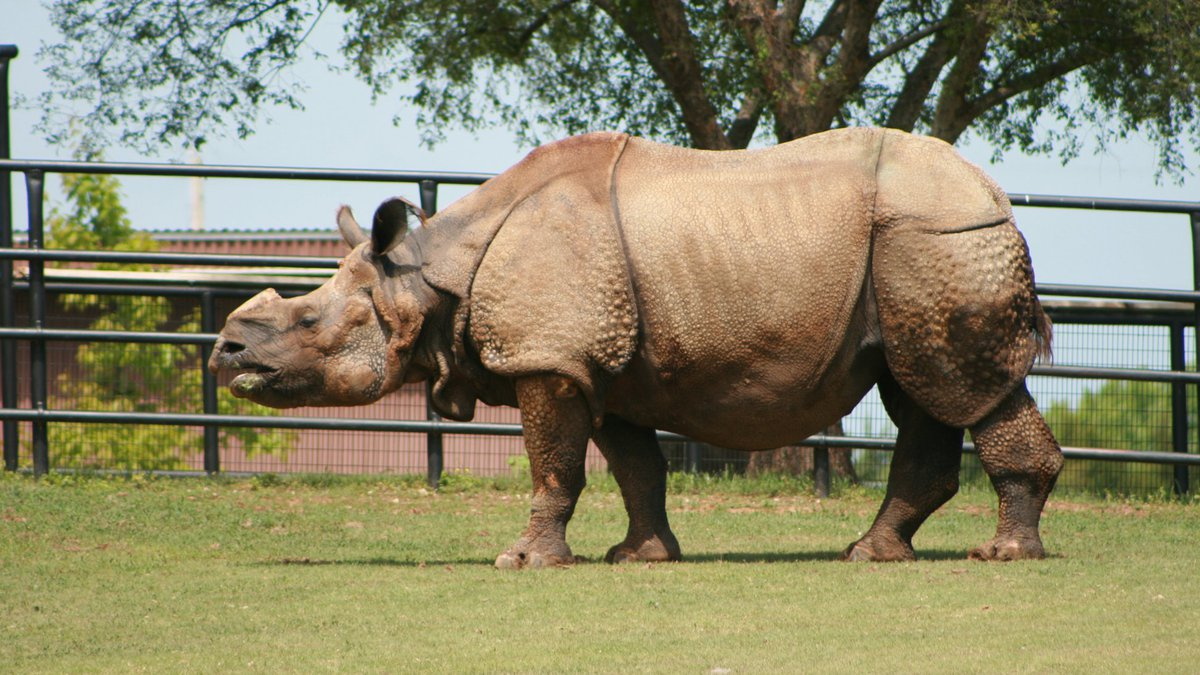 Joya, a greater one-horned rhinoceros at Salina's Rolling Hills Zoo, died at the age of 33.