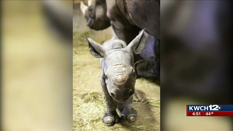 Black baby rhino at Lee Richardson Zoo in Garden City