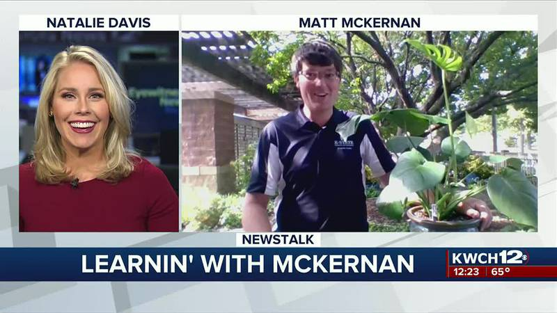 Learnin' with McKernan : Caring for houseplants in cooler temperatures