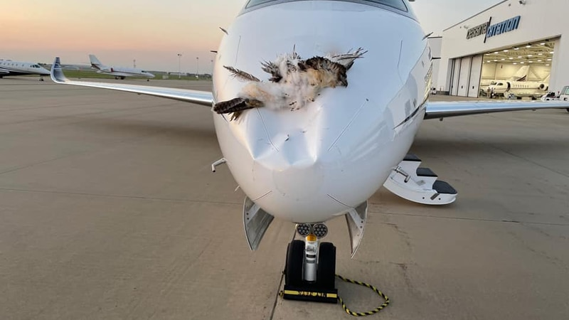 A mid-air collision with a bird forced a Cessna Citation to make an emergency landing at...